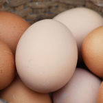 Let's Get Cracking: Celebrate World Egg Day