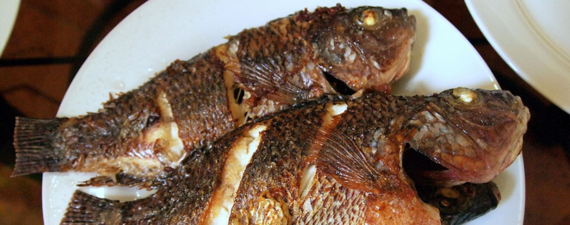 Is tilapia safe to eat for Poisonous fish to eat