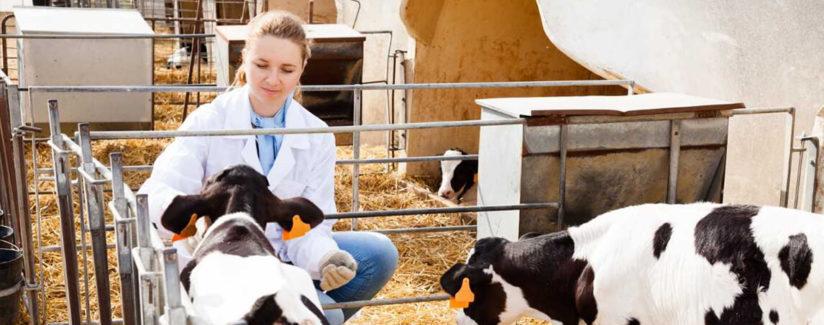 best-food-facts-anitbiotics-series-pt-2