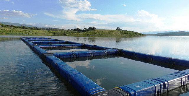 Aquaculture Making a Splash | BestFoodFacts org