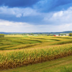 Chlorpyrifos: What We Know Today