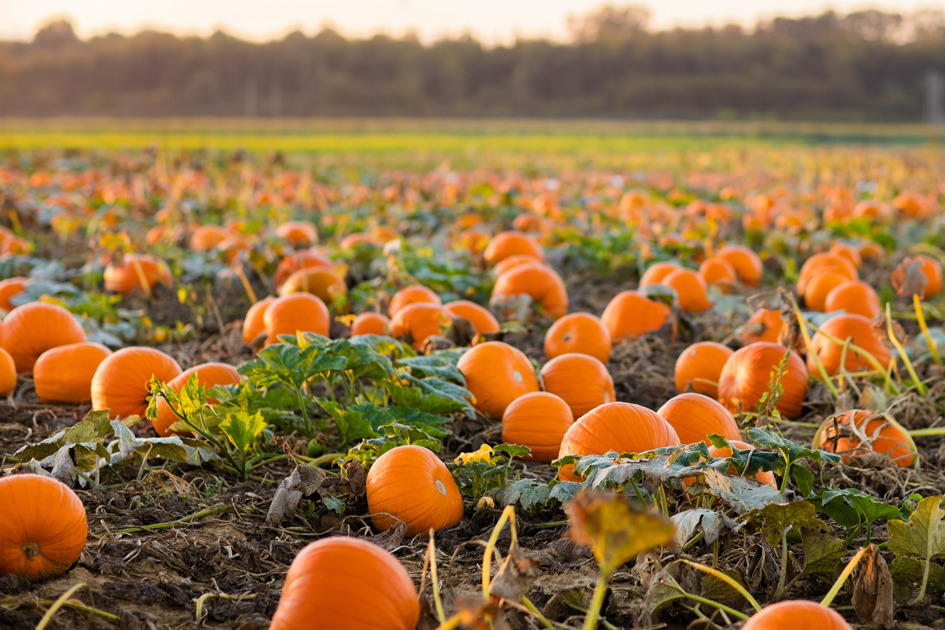 Food Facts 8 Things To Know About Pumpkins