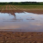 Heavy Rains Affect Crops