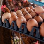 What's the Difference Between Cage-Free and Regular Eggs?