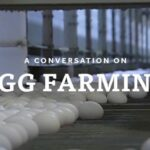 A Conversation on Sustainable Egg Farming
