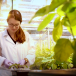 Gene Editing and Soy For Healthier Food and a Healthier Planet